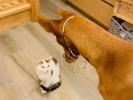 Jak Faraon ke kočce přišel