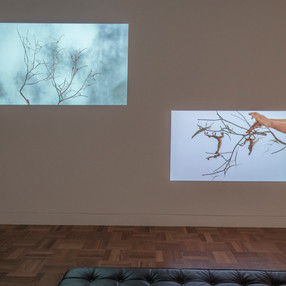 Maria Fernando Cardoso installation view