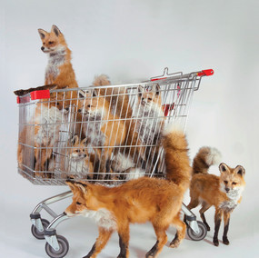 Rod Mcrae Operation Foxtrot, 2010 seven mounted red fox, steel shopping trolley dimensions variable courtesy and © the artist
