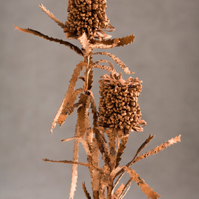Linelle Steptoe Colonised - Banksia Serata, 2009 cane toad skin and floristry wire. courtesy and © the artist