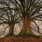 tree-3097419_1920.jpg
