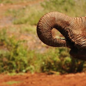 10 reasons why you should volunteer in Uganda