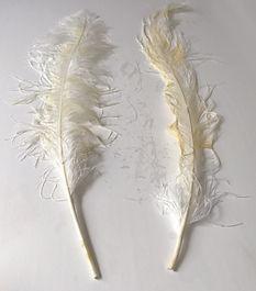 Feather_Image.jpg