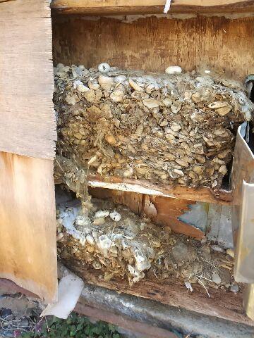 旧工場のネズミの巣発見
