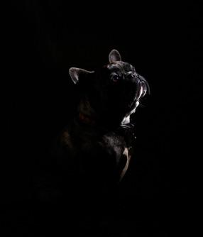 Odie Shadows Snoot.jpg