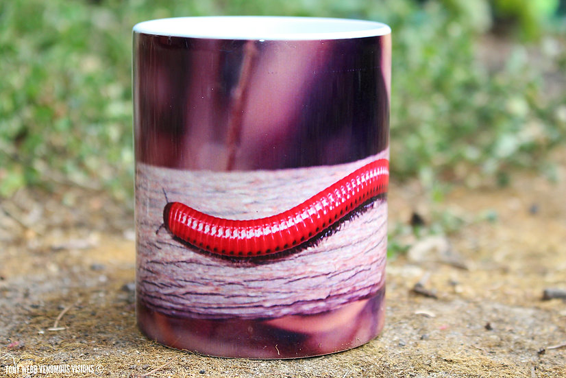 Centrobolus sp Mozambique fire - 11oz coffee mug
