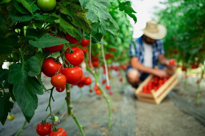 organic-food-farm.jpg