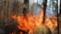 incendio bosque.jpg