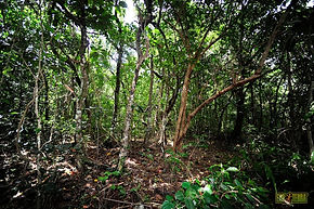 Geckodome High End Crested Geckos