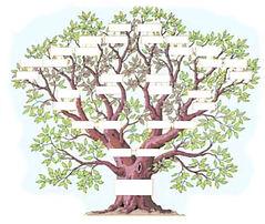 exemple-arbre.jpg