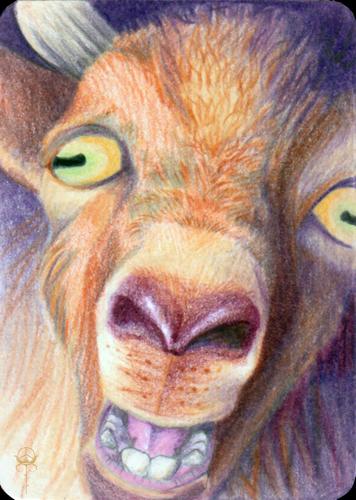 Goat Gruff