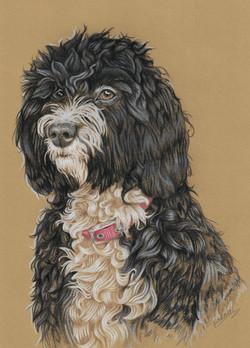 Pet Portrait - Pip