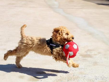 Puppy Essentials!