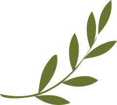 olive-branch-transparent-6.png