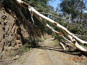 Closure of Belowra Road