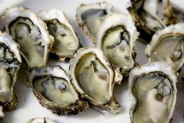 Twofold Bay shellfish alert