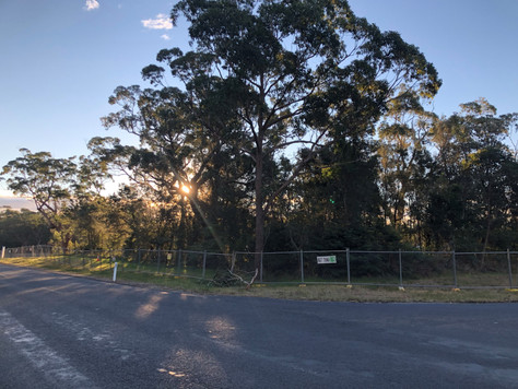 Council Planner claims Broulee clearing is legal