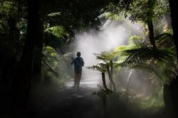 DanielBateman -Into the Mist
