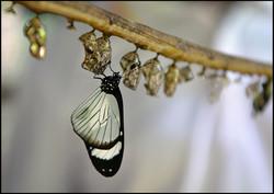 Gold - Zanzibar Butterfly Centre by Yvonne Matthews
