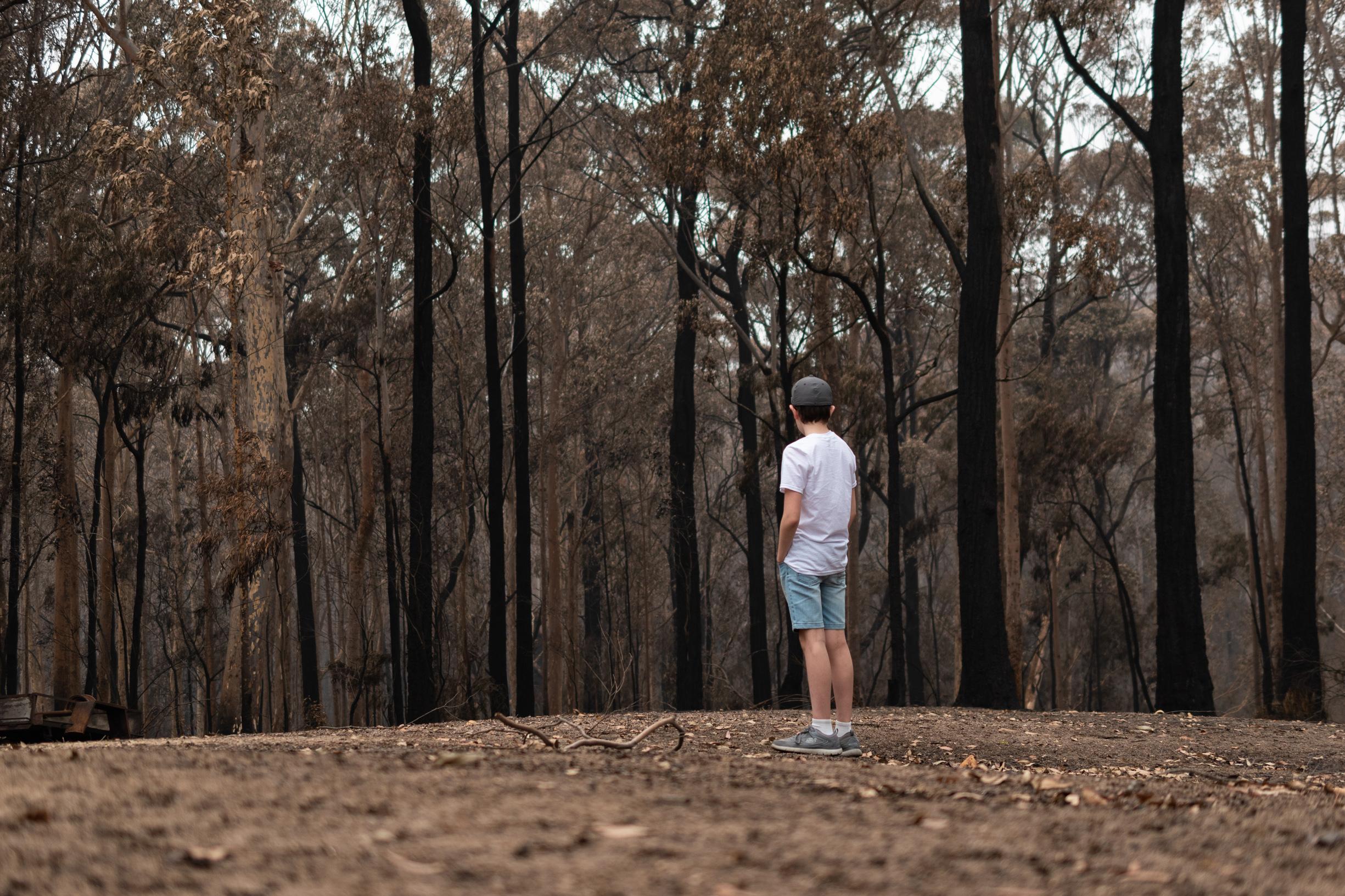 Bushland Once Green- Daniel Bateman