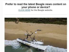 Your Beagle midweek mailout edition OUT NOW