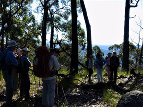 Bay Bushwalkers: Venture to Bolaro Mountain
