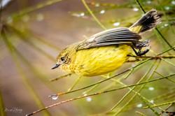 Bird on the run