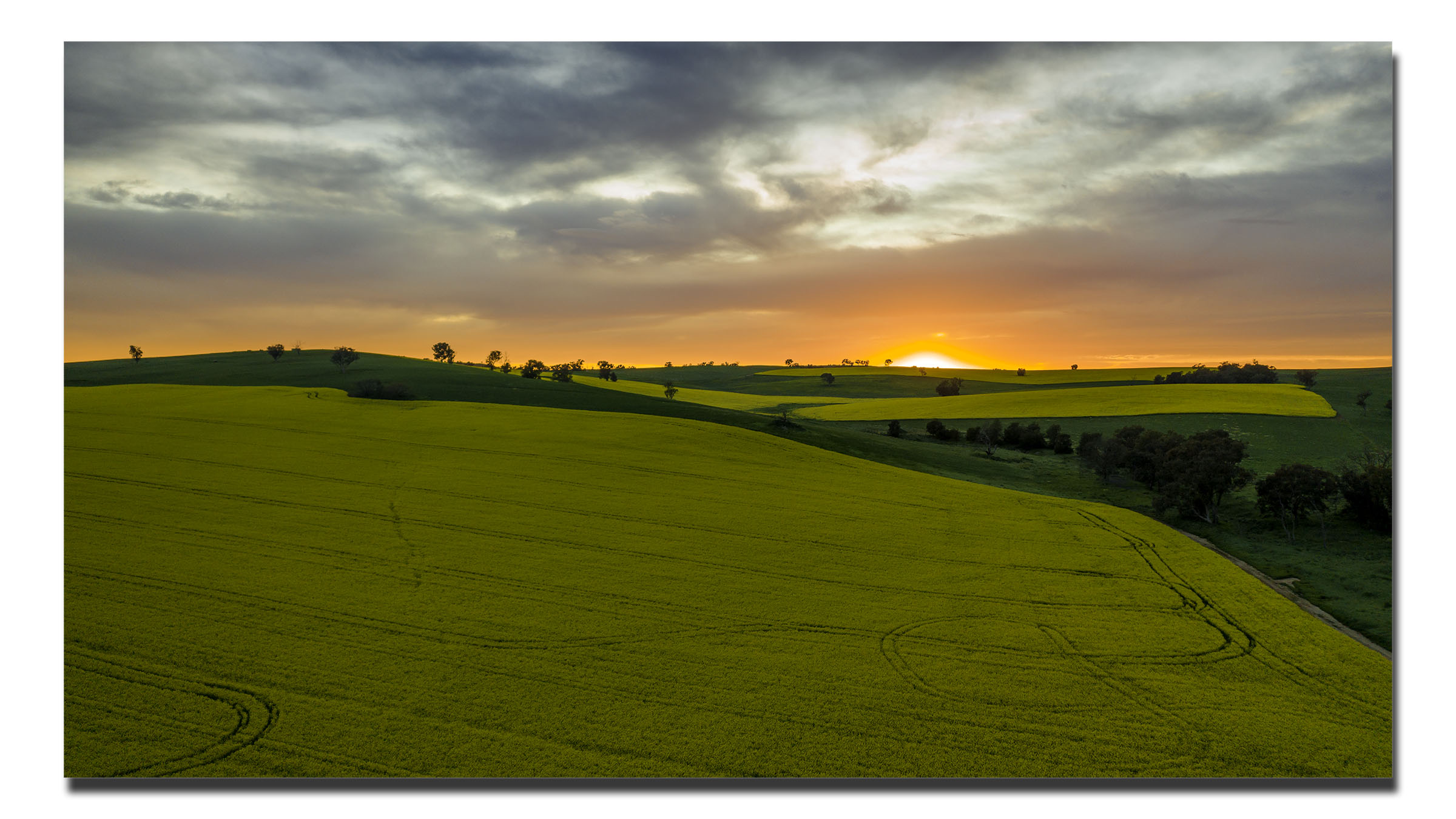 Dawn on the Canola