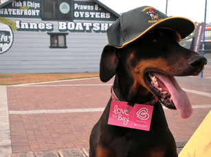 Eurobodalla Canine Club to commence final intake for 2020