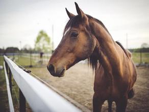 Moruya Racecourse sale price revealed as $1,150,000