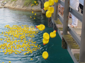 Rotary Ducks ready for the big race Jan 26th