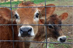 Shirley Gunter-21-C-1-On the Farm
