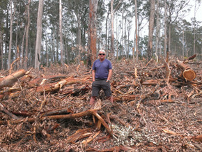 """NSW Forestry Corp logging practice 'reckless and dangerous"""""""