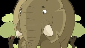 Eurobodalla Covid cases: Addressing the Elephant in the room