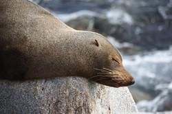 IoN Daniel Bateman-26-C-2-Sleepy Seal