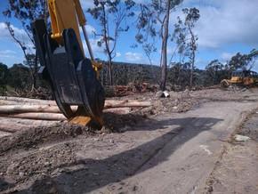 Voters warned of logging industry fake-news in Eden-Monaro