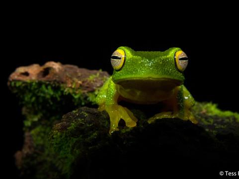 Dalmeny's Tess Poyner announced as Junior AG Nature Photographer of the Year