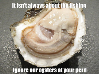 Is sacking the oyster industry rep part of the rollback game strategy for Batemans Marine Park