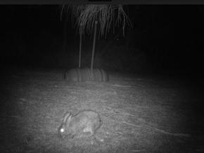 Annual rabbit control program begins