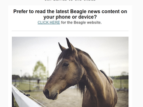 Latest Beagle midweek mailout OUT NOW