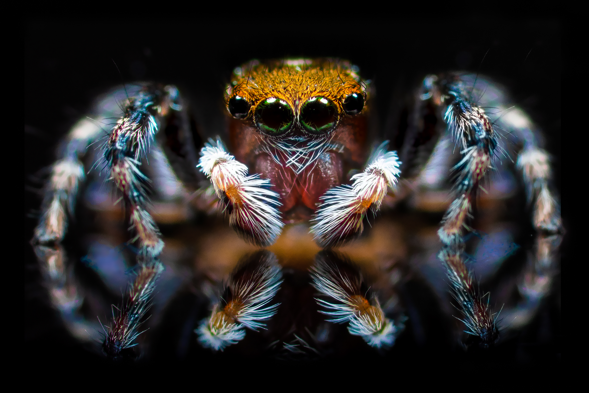 Jumping Spider_ Dave Kemp