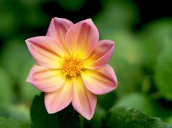 S_Pink Flower by Tara Skipper