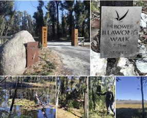 Batemans Bay Bushwalkers: Illawong Sanctuary Reserve