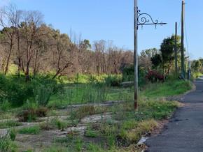 Poor Mogo Bushfire Recovery effort comes under the spotlight