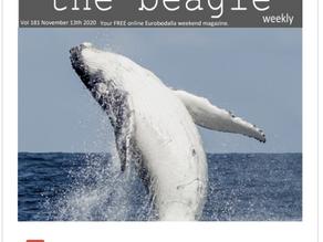 Beagle Weekender of November 13th 2020