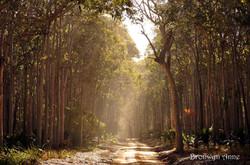 Bronwyn Anne Mystical Forest