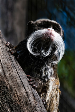 Whiskers by Rob Geraghty
