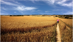Fields of gold  - Colin Pass