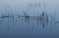 Swamp Geometrics