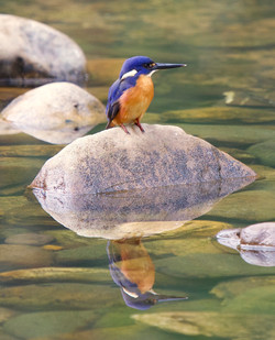 Phil Warburton-14-C-1-Kingfisher on a ro